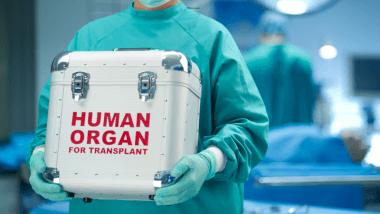 Human organ transplants