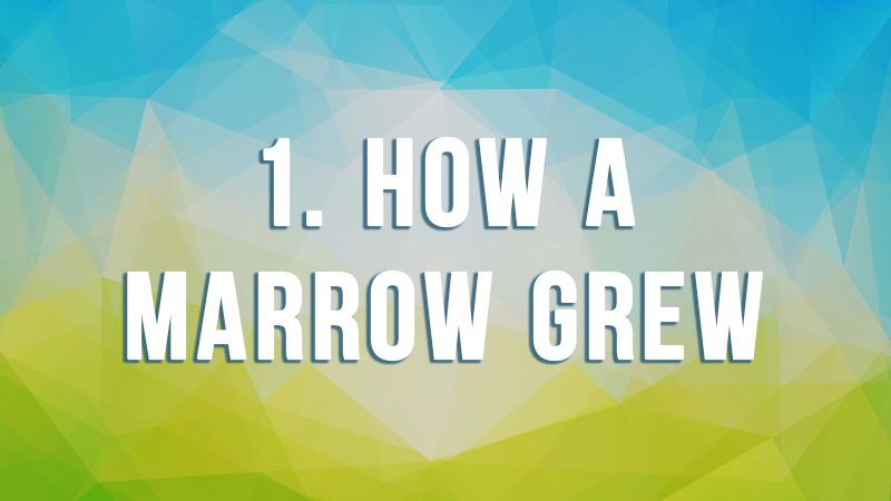 1. How a Marrow Grew